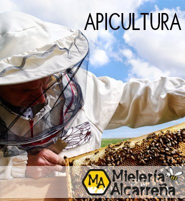 APICULTURA MIELERIA